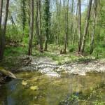 Précieuses zones humides