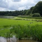 L'étang du milieu est l'un des étangs de ce site Natura 20000