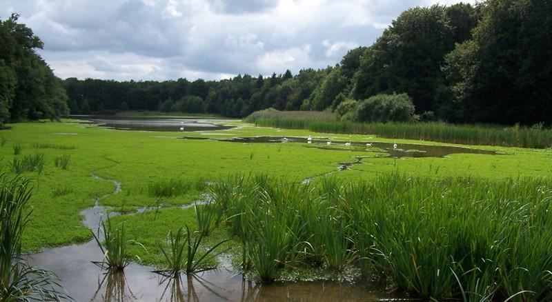 http://www.smarl.fr/riviere-largue/wp-content/uploads/2013/11/Etang-du-milieu-2013.08.26-5-Chavannes-sur-l%C3%A9tang.jpg