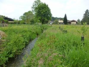 Le Babersenbach, après 1 an de végétation!
