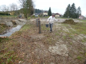 Suite aux travaux d'assainissement, plantation et ensemencement des berges du Babersenbach à Seppois le Haut