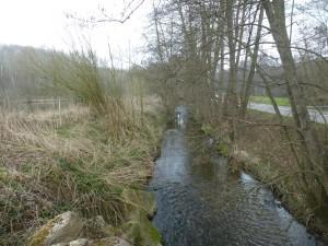 Vue depuis l'aval sur le Grumbach, contraint, à gauche, par la digue de l'étang en remblais